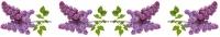lilacs divider