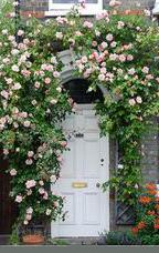 roses over door