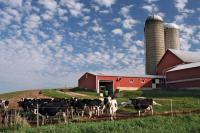 Wisc dairy farm