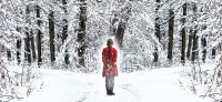 the-snow-garden-cover