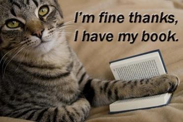 cat-tabby