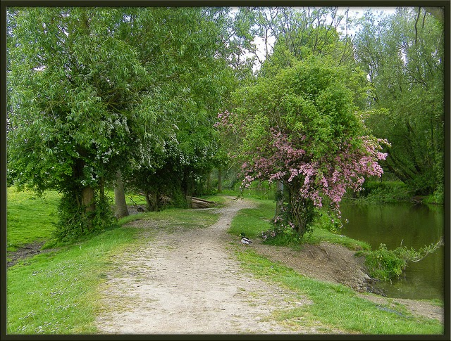 a walking trail in Port Meadow